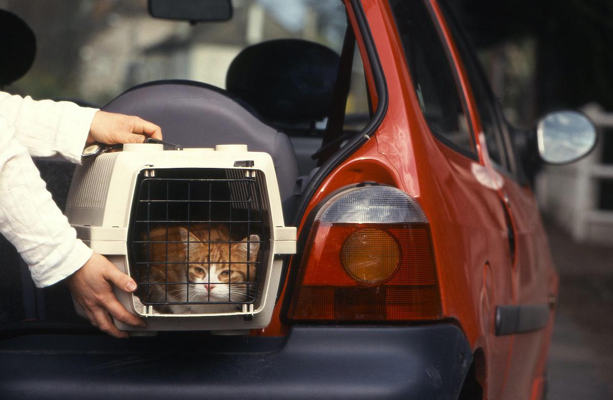 Katze auto